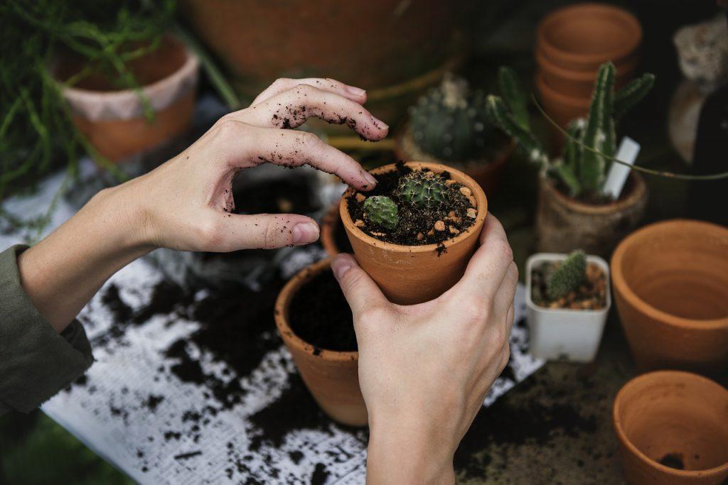 Gardener potting up plants in Torquay